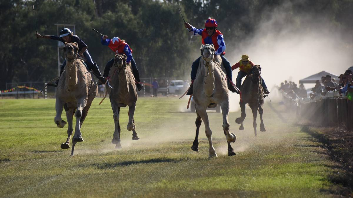 Camel racing traditionally draws crowds to Forbes on Good Friday.